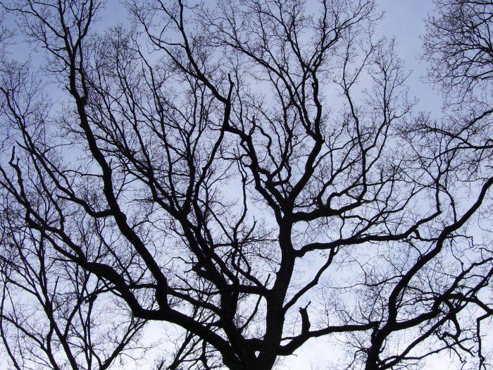 Un árbol con ramas creciendo en todas direcciones